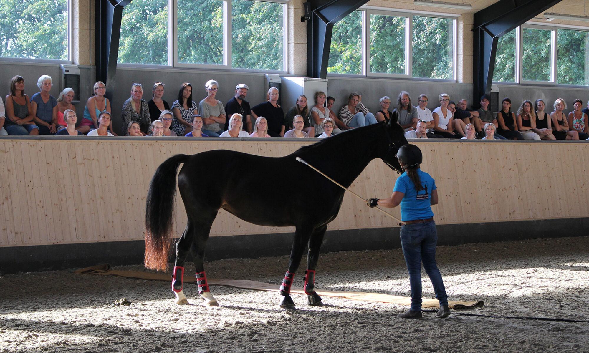 Ranch Equus Horsemanship